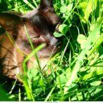 Tierbehandlung Kater Minor